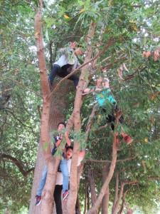 日本の猿,アメリカに上陸!?違いました。大木にみんなが登ったところを撮りました。【木登りは許可されていることをこのページをご覧の皆様にお断りしておきます。】