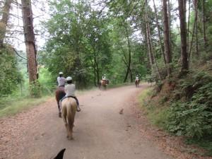 山道(Trail Road)を行きます。
